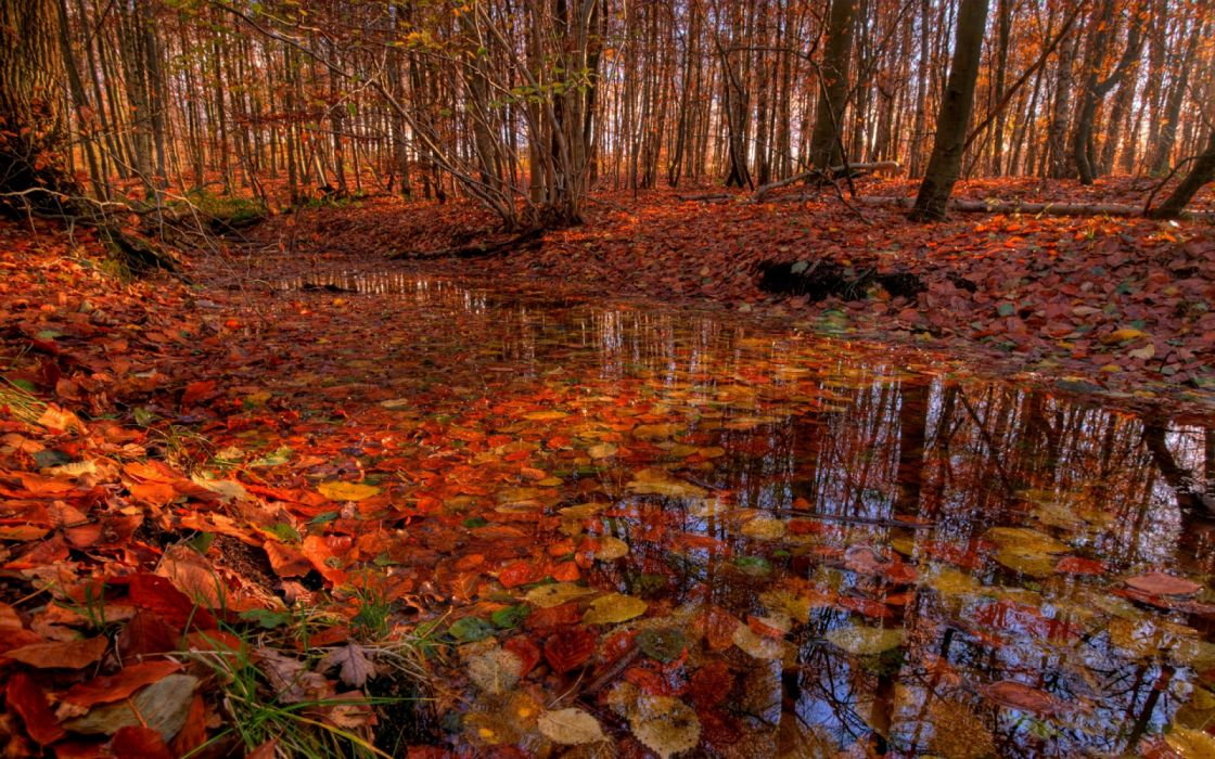 water trees forest leaves autumn nature wallpaper