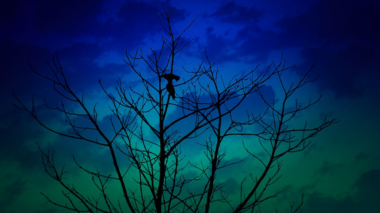 birds on tree wallpaper