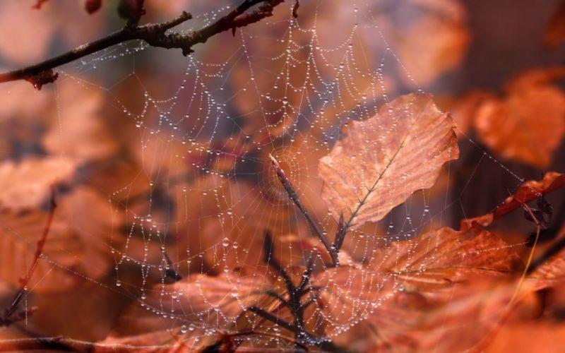 water drops leaves macro autumn nature wallpaper
