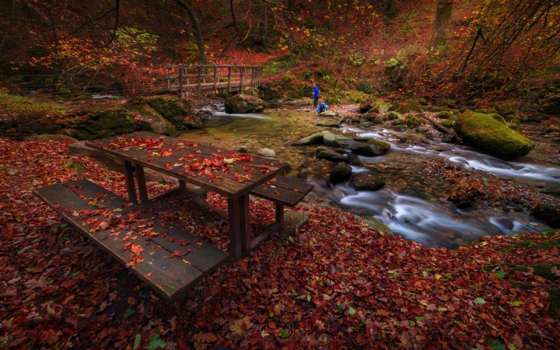 water trees children leaves bridges autumn nature wallpaper