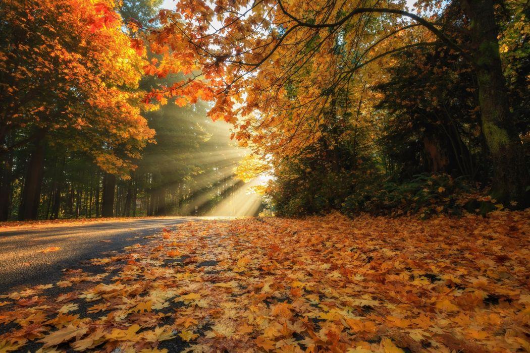 trees road beautiful leaves autumn sun wallpaper