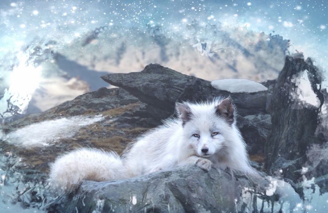 mountains animals foxes nature retouch snow wallpaper