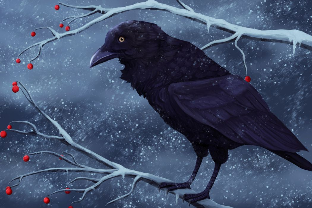 Raven on an icy branch with red berries against a background of falling snow food winter birds figures snow widescreen wallpaper