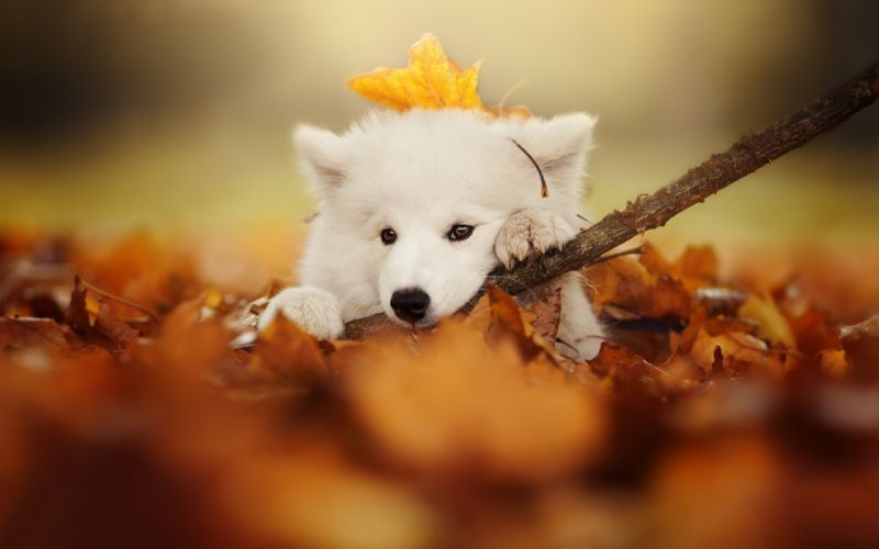 cute beauty animals leaves cute autumn nature blurred dogs wallpaper