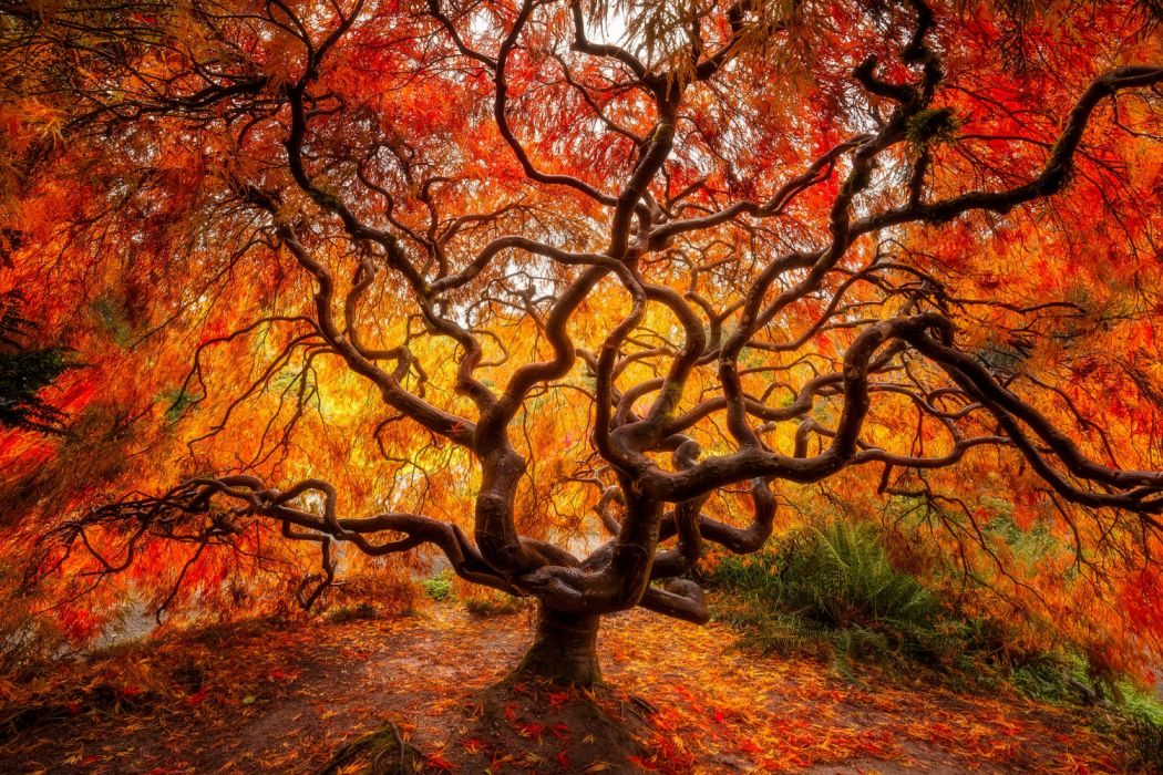 trees leaves autumn nature wallpaper