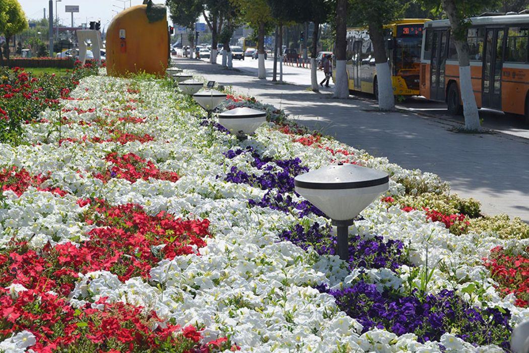 city scenery landscape turkey natural beauty tree malatya turkiye flower wallpaper