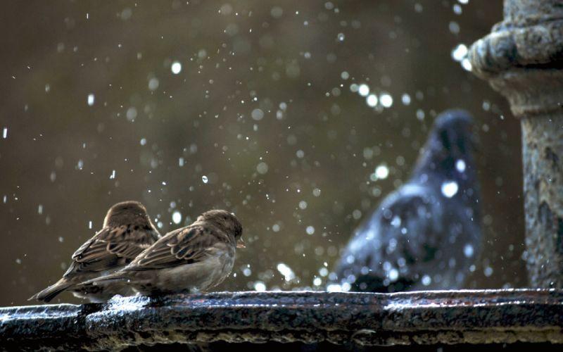 water drops macro birds wallpaper