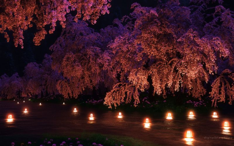 spring water trees night nature flowers wallpaper