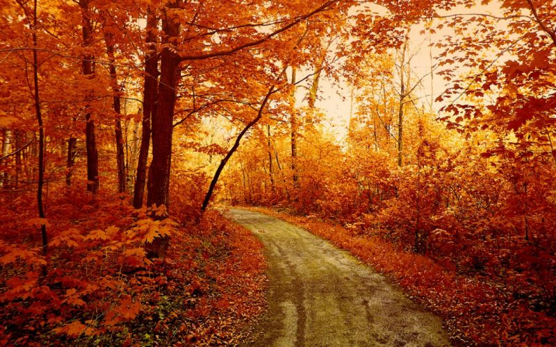 trees road forest autumn nature wallpaper