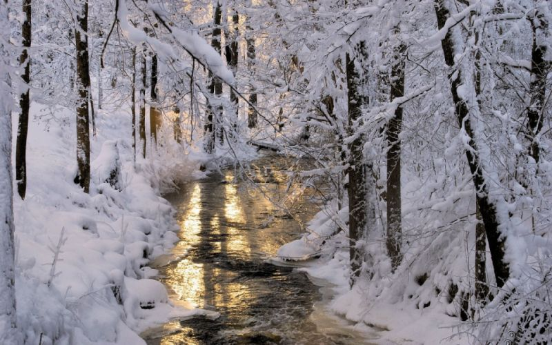 water winter wood nature snow wallpaper