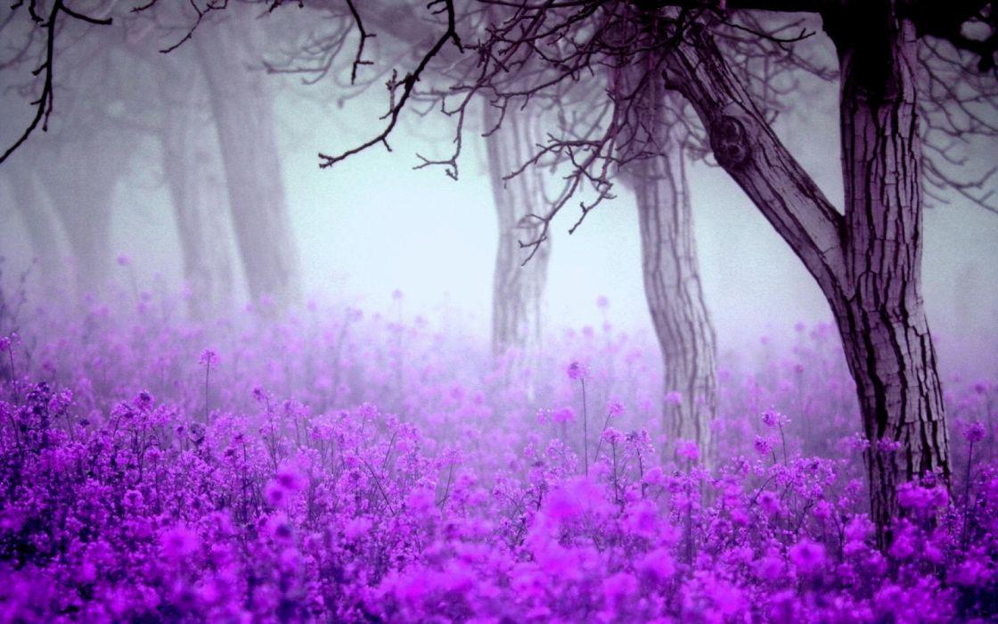 spring trees nature fog flowers wallpaper