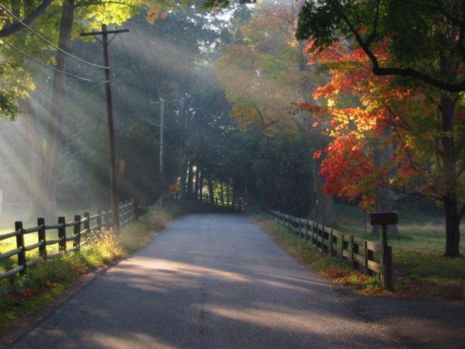 nature autumn road tree subshine wallpaper