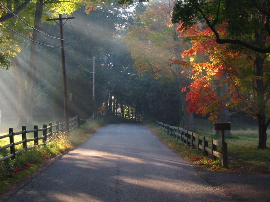 nature autumn road tree subshine wallpaper