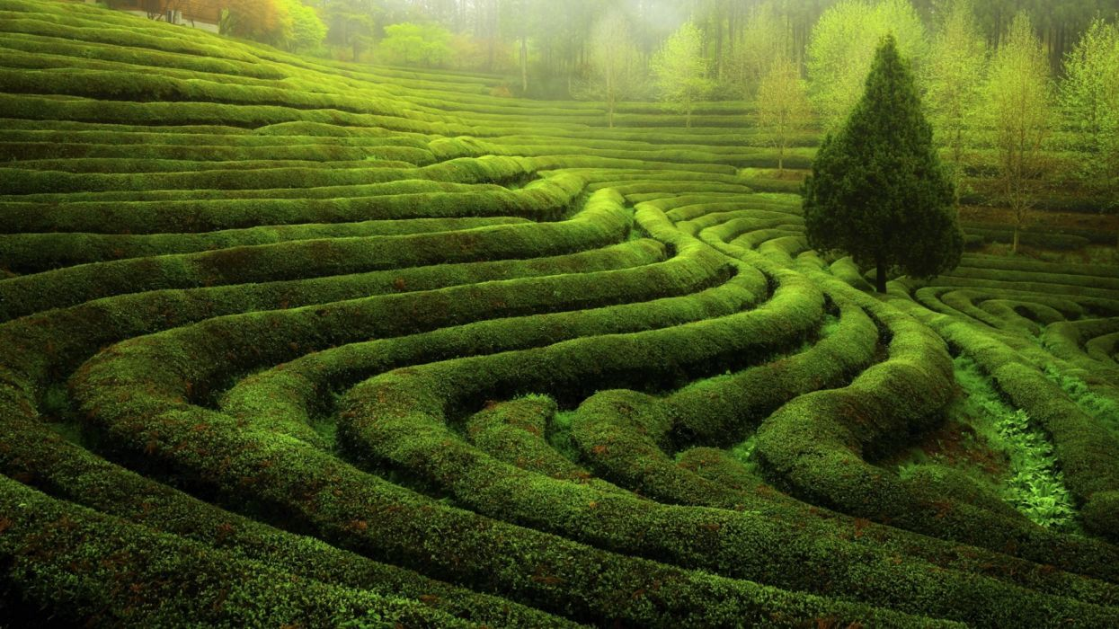 nature landscape tree green wallpaper