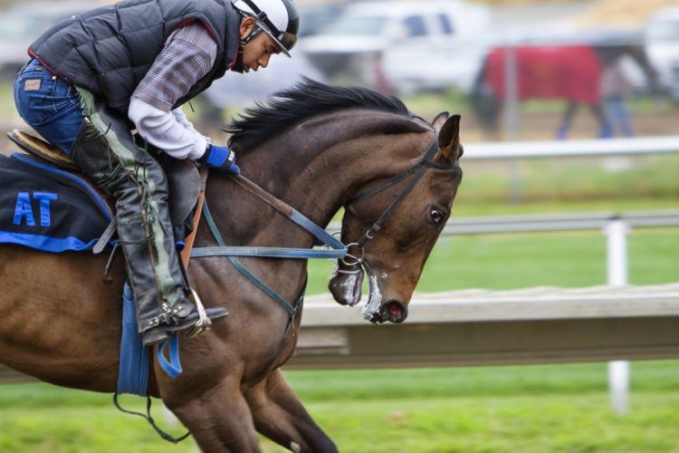 Horse Backriding Race wallpaper