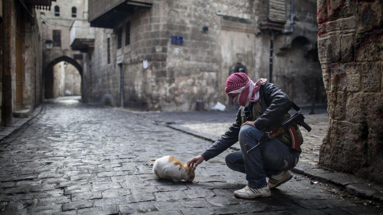 Photography war cat street gun Aleppo Syria animals wallpaper