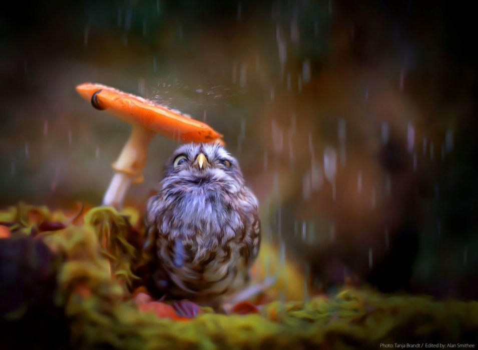 Birds Little Cute Owl wallpaper