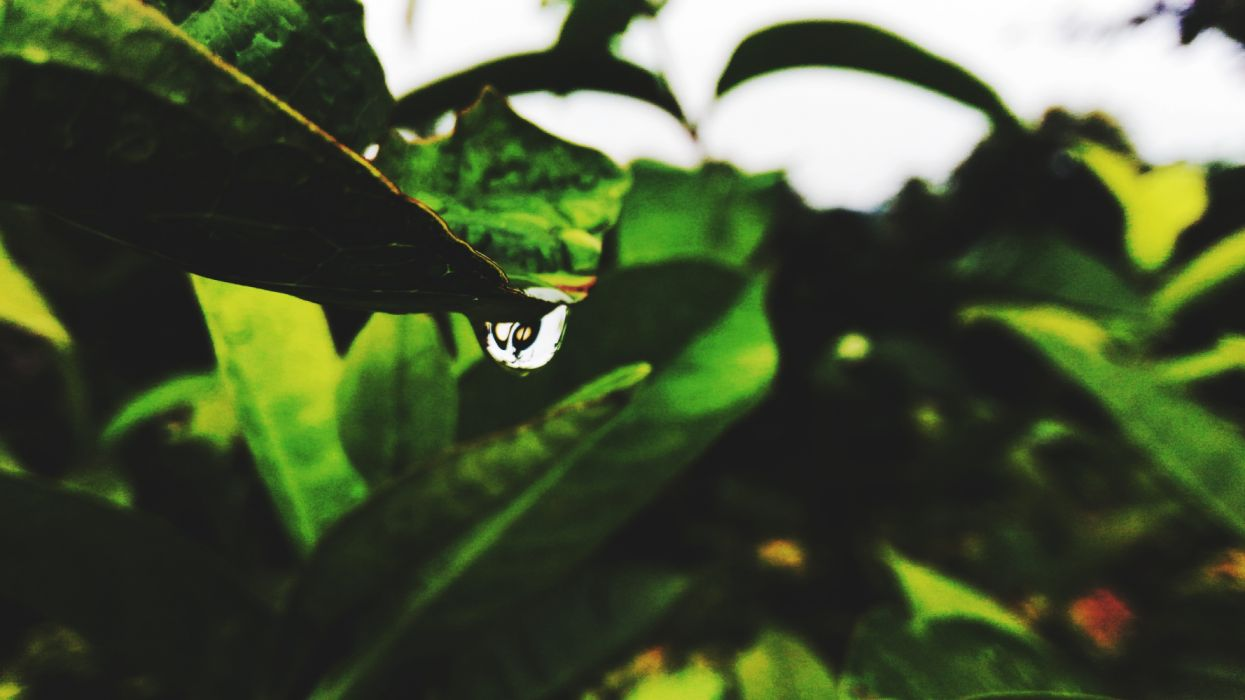 Nature leaf drop water green wallpaper