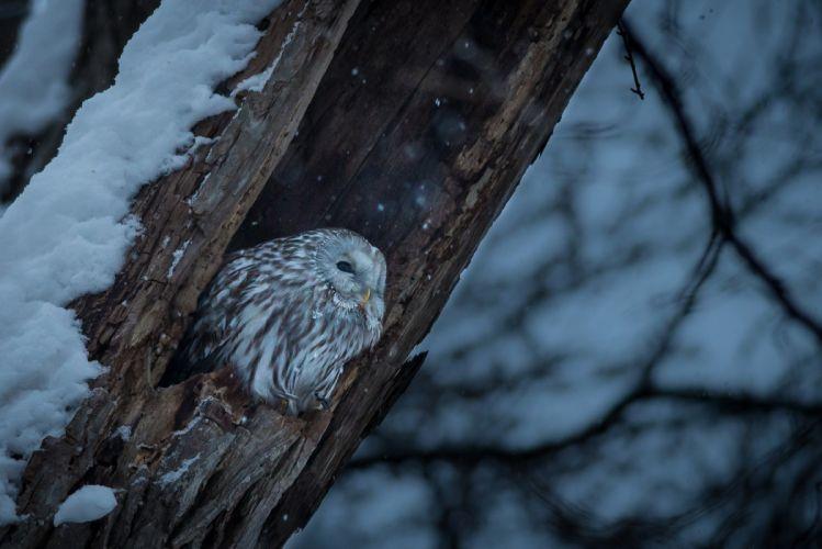 trees winter nature birds snow large-format wallpaper