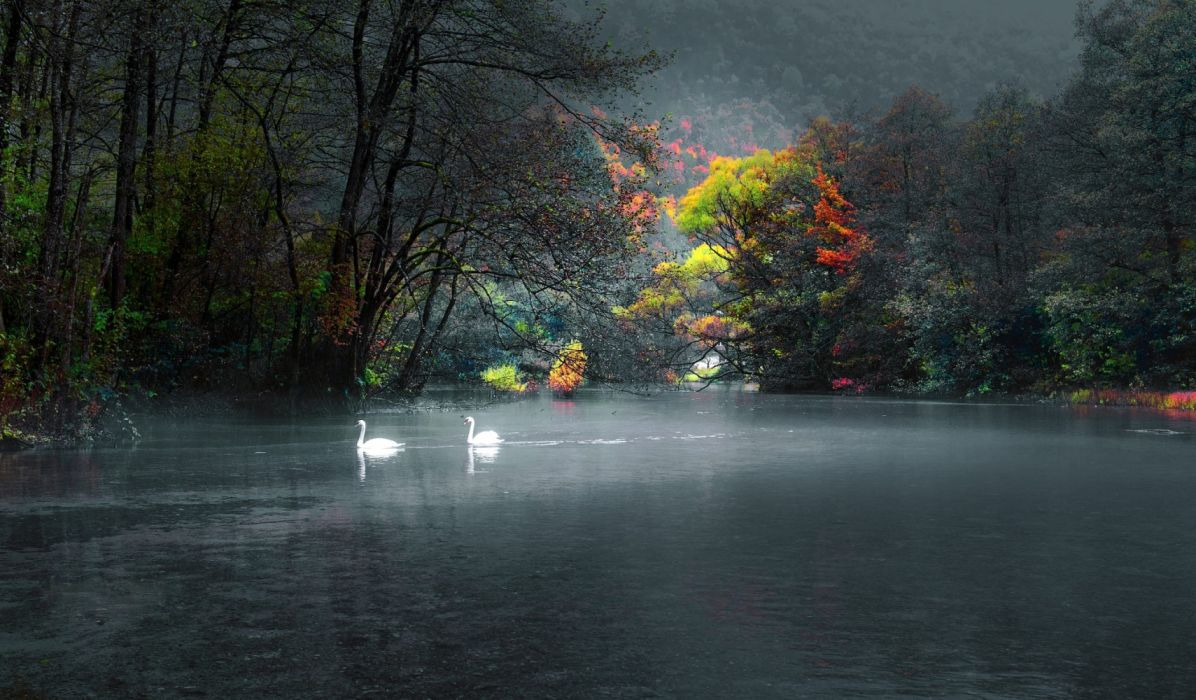 water trees nature birds wallpaper