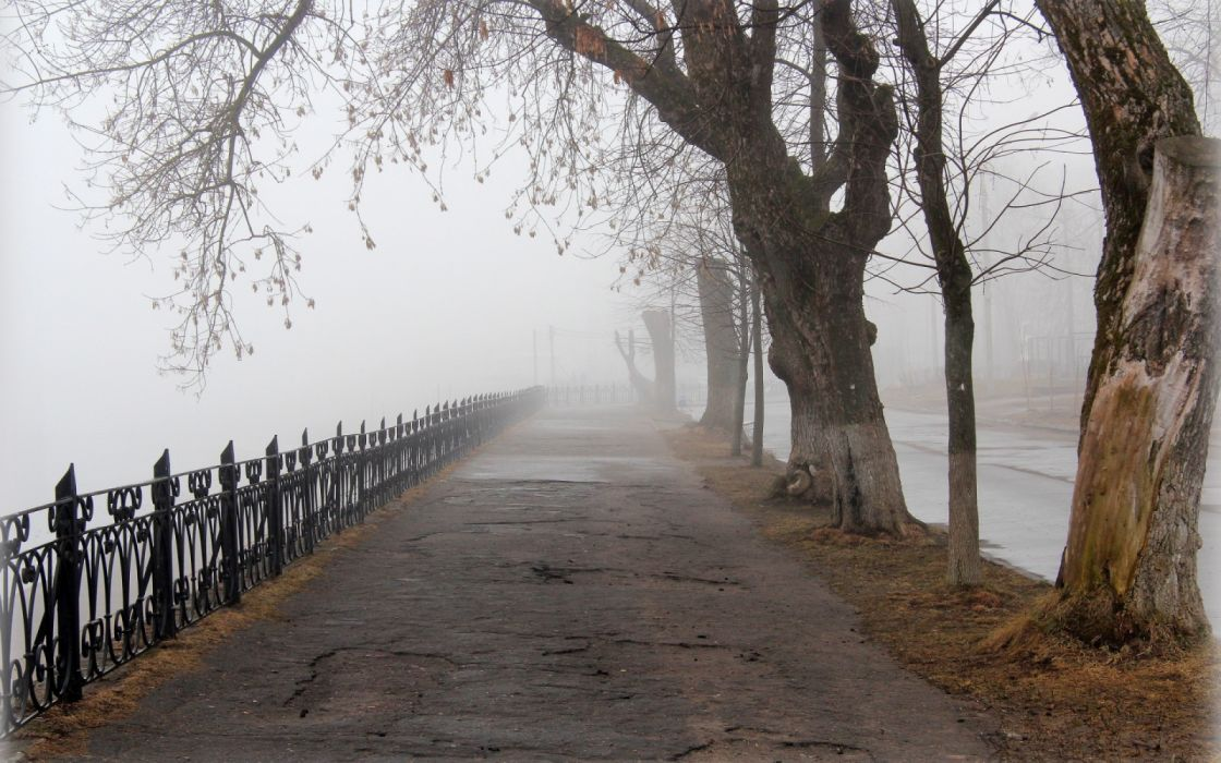 nature fog tree road wallpaper