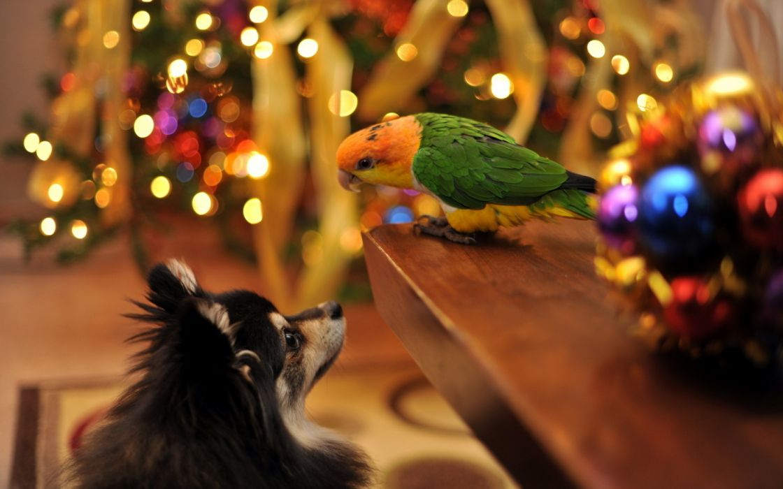 christmas lights decoration animal dog bird cute wallpaper