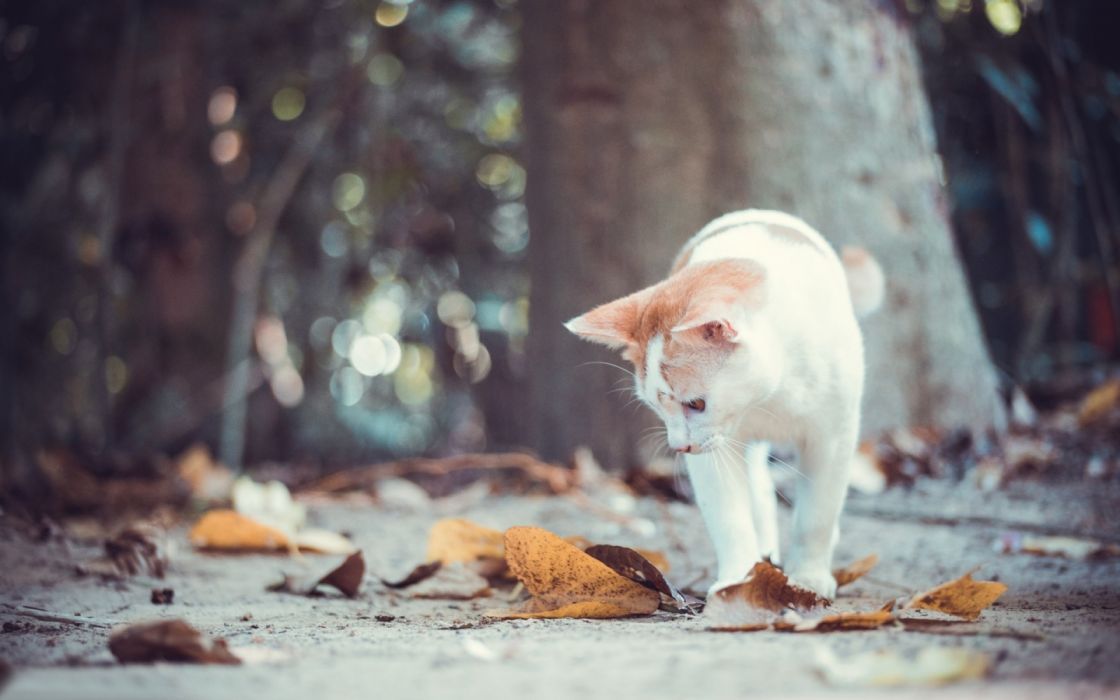 bokeh trees animals cats leaves autumn nature wallpaper