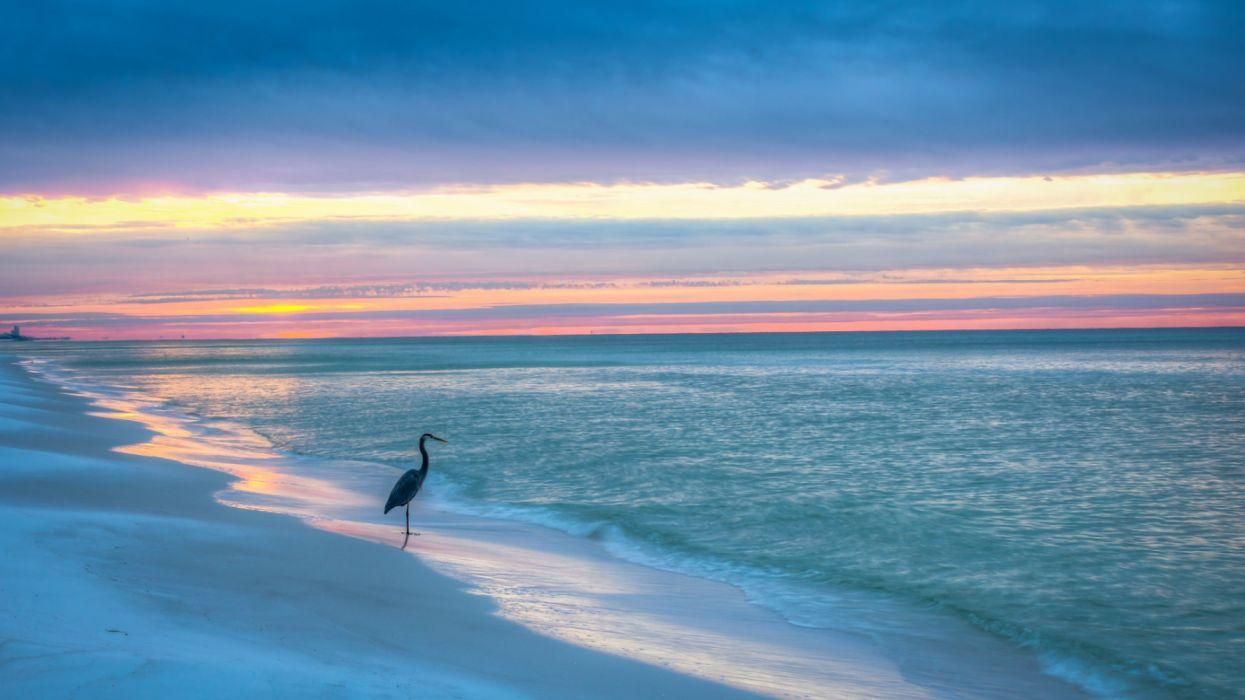 beach nature bird sea ocean wallpaper