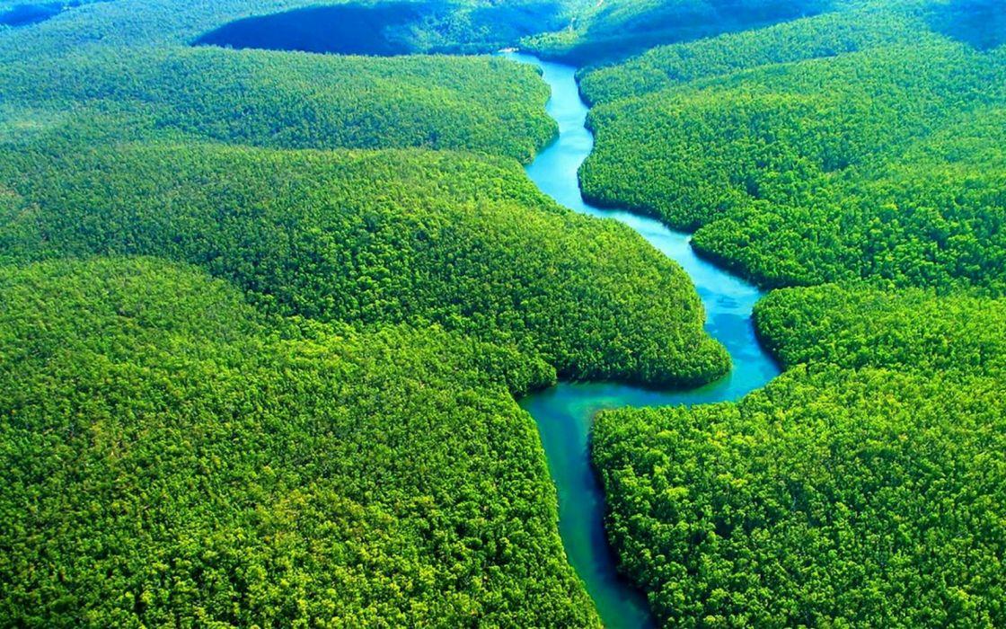 rio amazonas selva naturaleza wallpaper