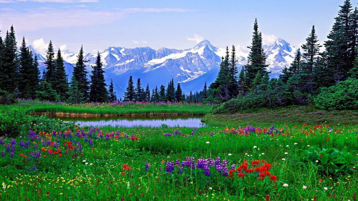 naturaleza paisaje lago flores montay wallpaper