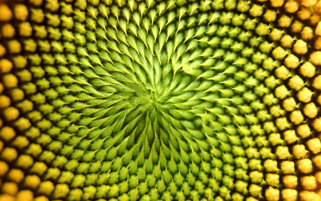 vegetal abstracto textura wallpaper
