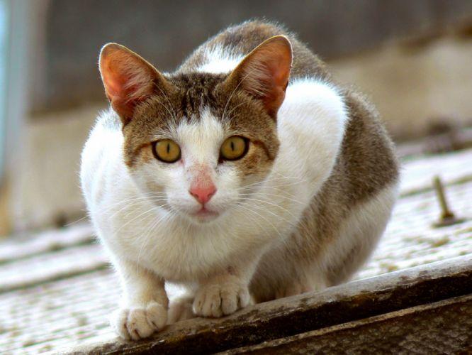 Tejado gato animales felino wallpaper