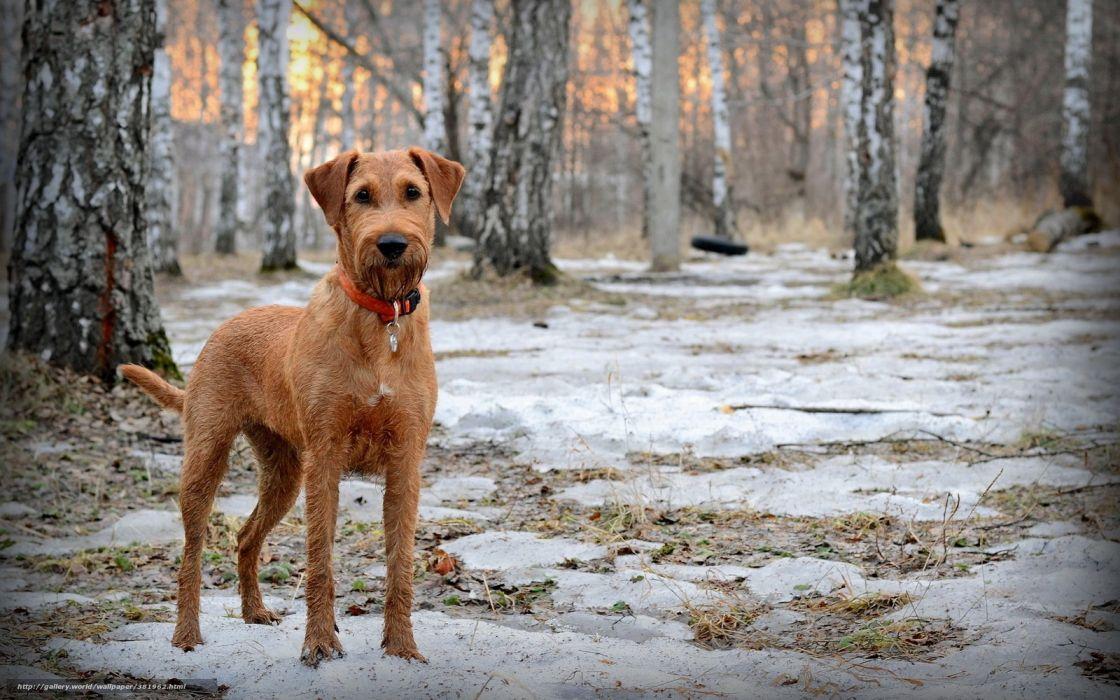 perro bosque nieve animales wallpaper