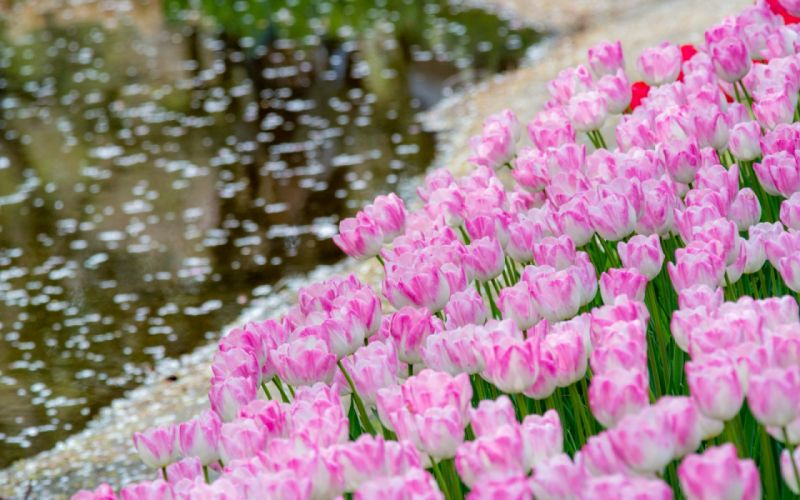 Spring water beautiful nature flowers widescreen wallpaper