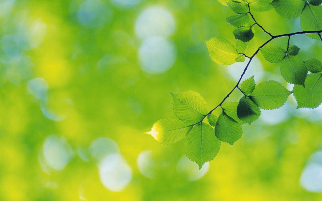 hojas arbol verdes naturaleza wallpaper