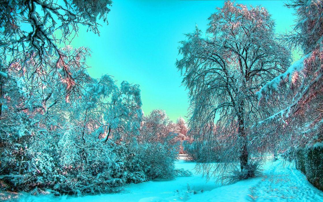 bosque nevado arboles naturaleza wallpaper