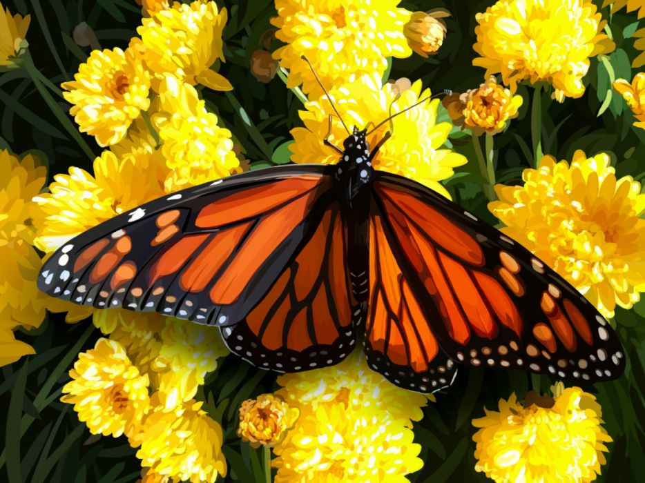 Butterflies Closeup Monarch butterfly wallpaper