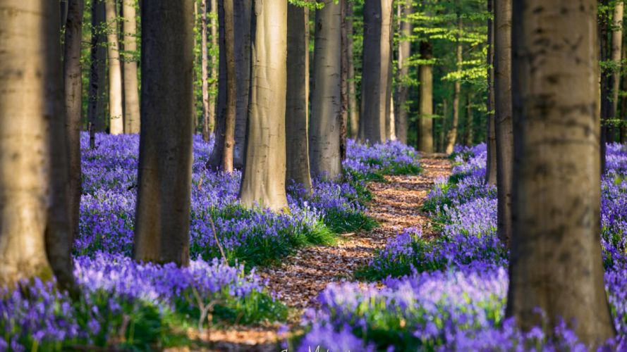 spring forest nature flowers widescreen wallpaper