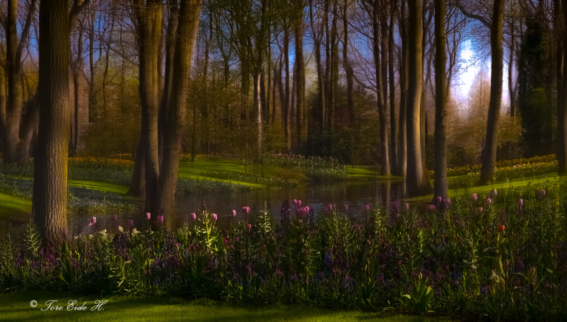 spring water trees forest sky nature flowers widescreen