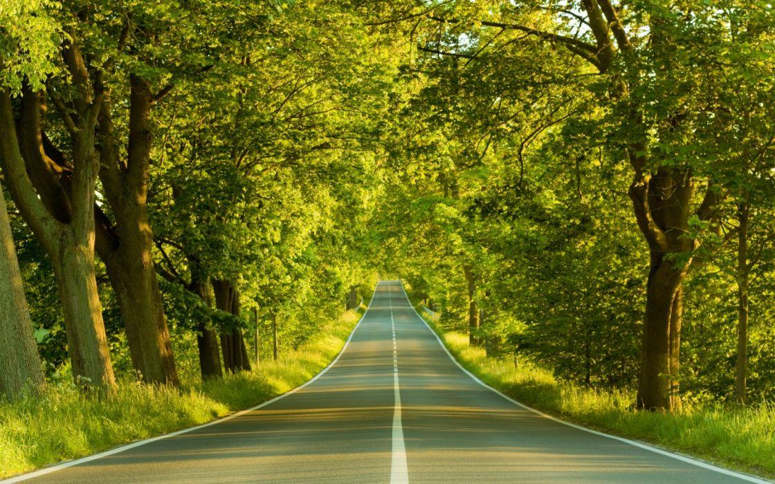 carretera arboles bosque wallpaper