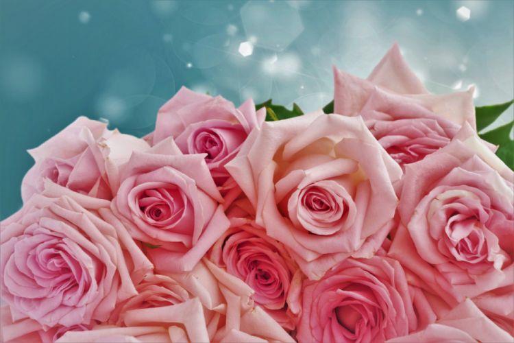small rose wallpaper