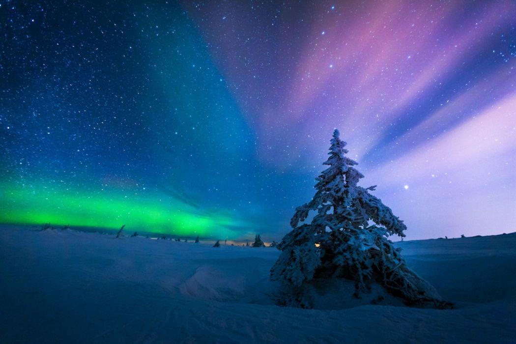 Aurora Borealis Earth Night Sky Snow Starry Sky Stars Tree Winter wallpaper