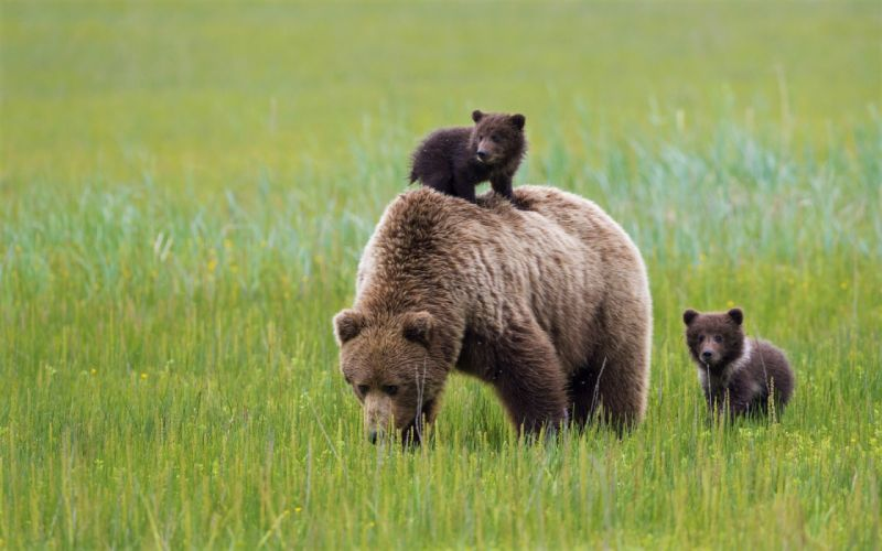 Bear cub dating in Melbourne
