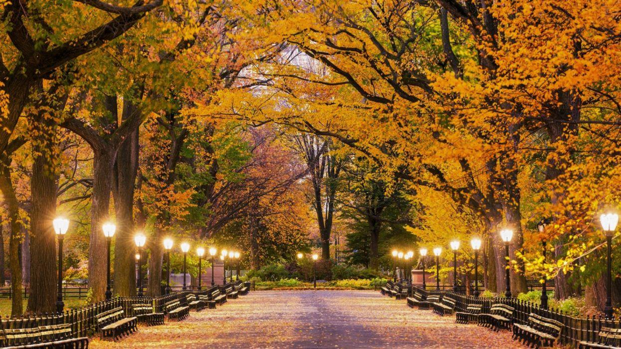 Central Park Fall Lamp Post Light New York Park Wallpaper