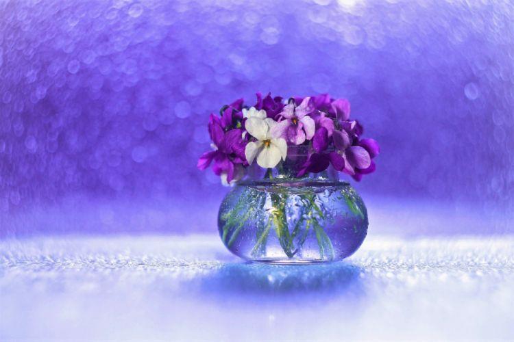 Bokeh Flower Pansy Purple Flower Still Life Vase Wallpaper