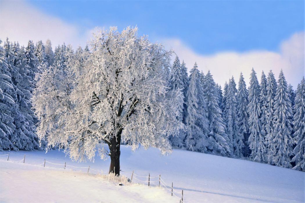 Earth Forest Snow Tree Winter B wallpaper