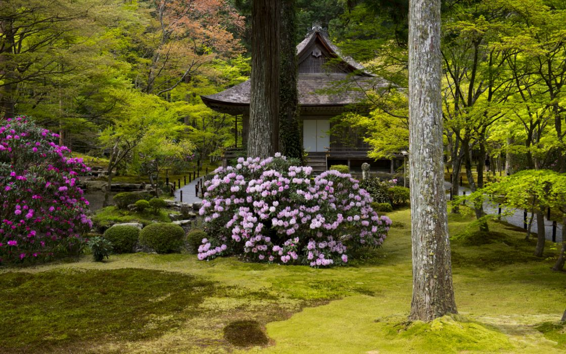 Japan Kyoto Parks Pagodas Rhododendron Trunk tree 539663 4320x2700 wallpaper