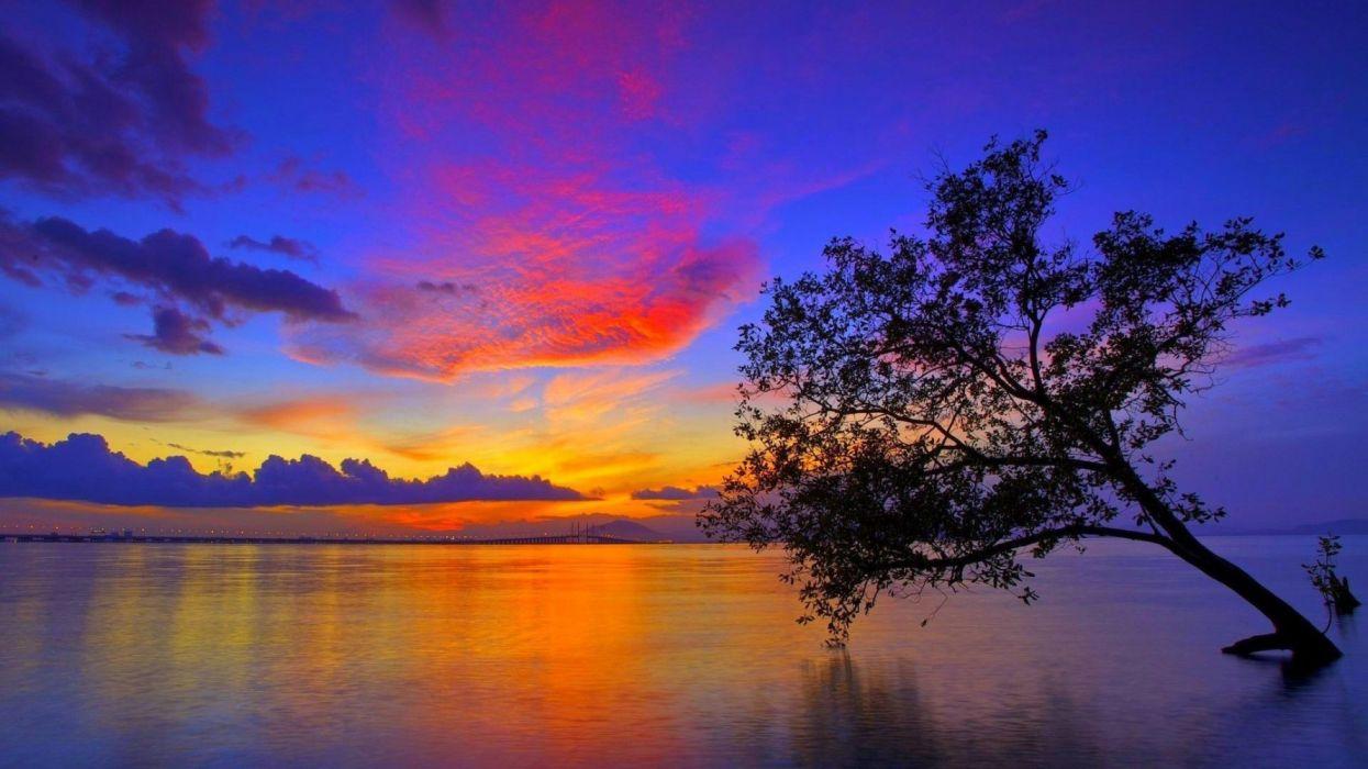 sunset-tree-water-sky-evening-sun-reflection-glow wallpaper
