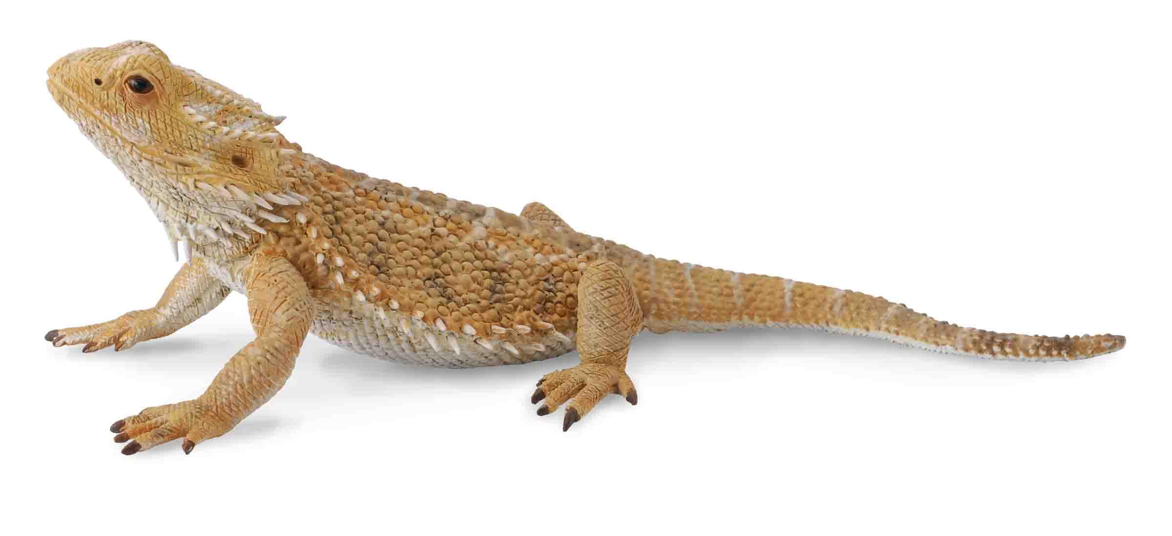 bearded lizard dragon - HD2292×1089