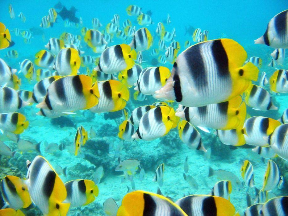 Tropical Fish Underwater Sea Ocean Sealife Wallpaper